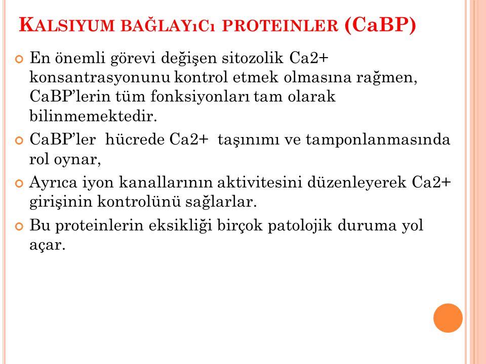 Kalsiyum bağlayıcı proteinler (CaBP)