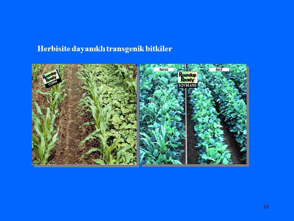 Herbisite dayanıklı transgenik bitkiler