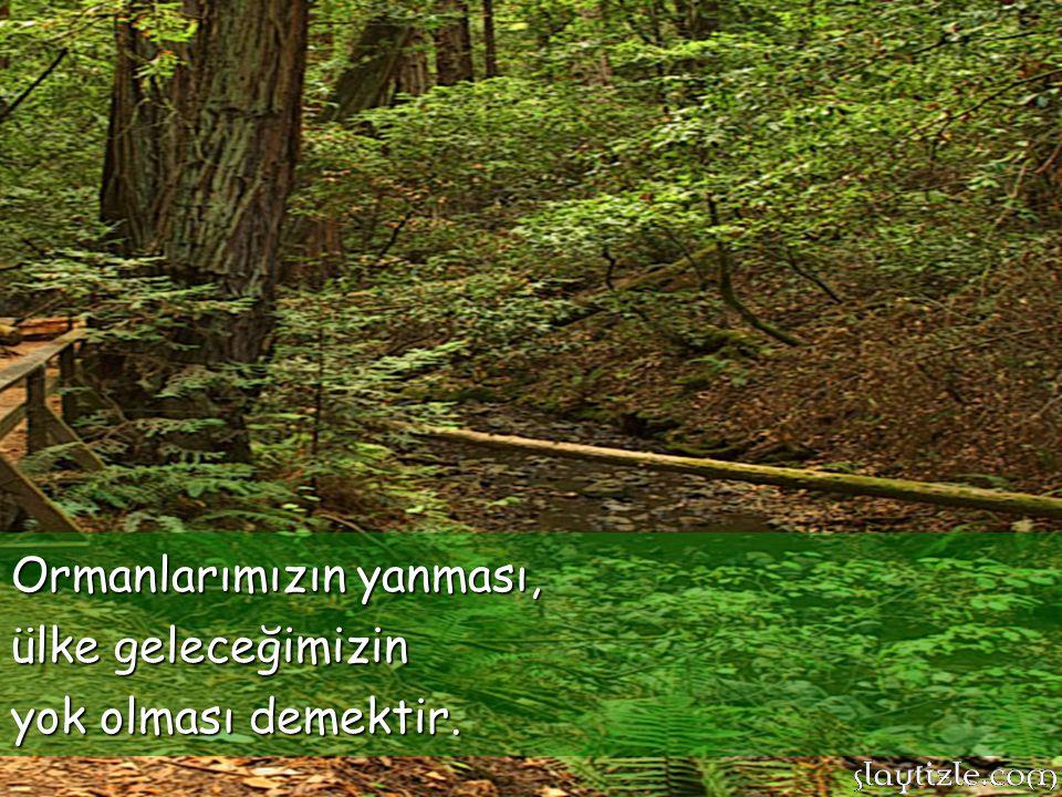 Ormanlarımızın yanması,