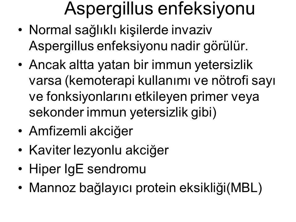 Aspergillus enfeksiyonu