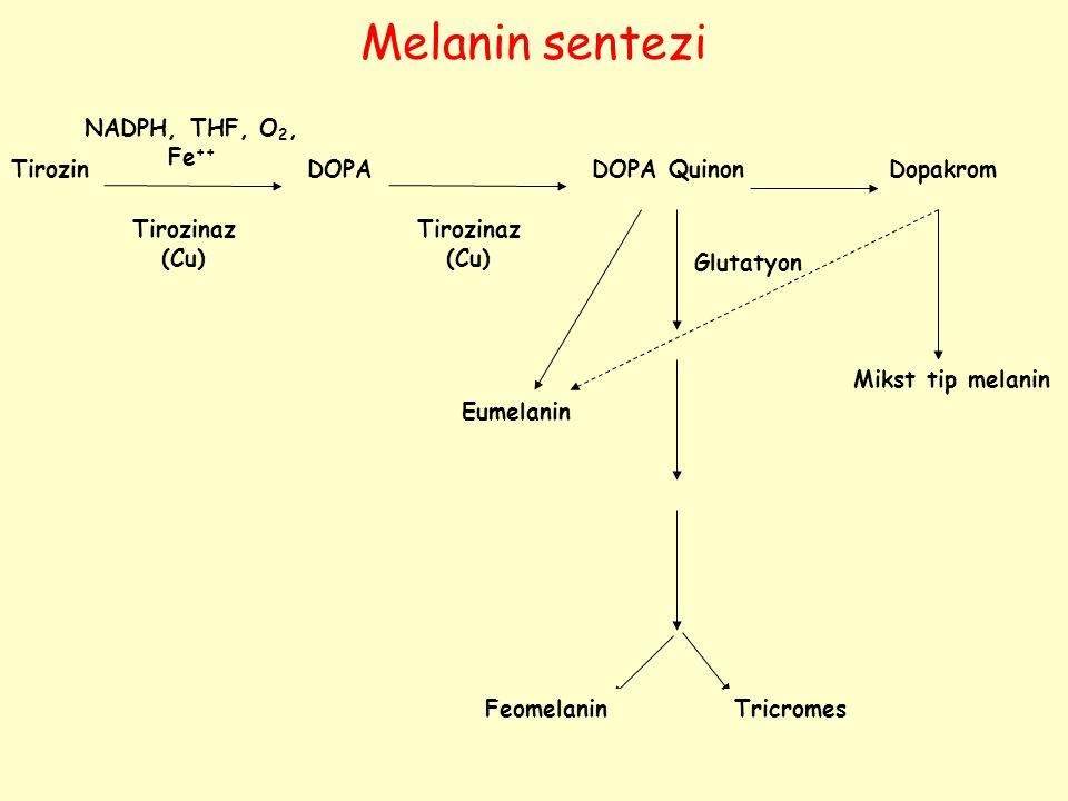 Melanin sentezi NADPH, THF, O2, Fe++ Tirozin DOPA DOPA Quinon Dopakrom