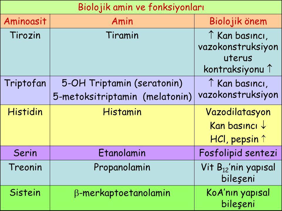 Biolojik amin ve fonksiyonları Aminoasit Amin Biolojik önem Tirozin
