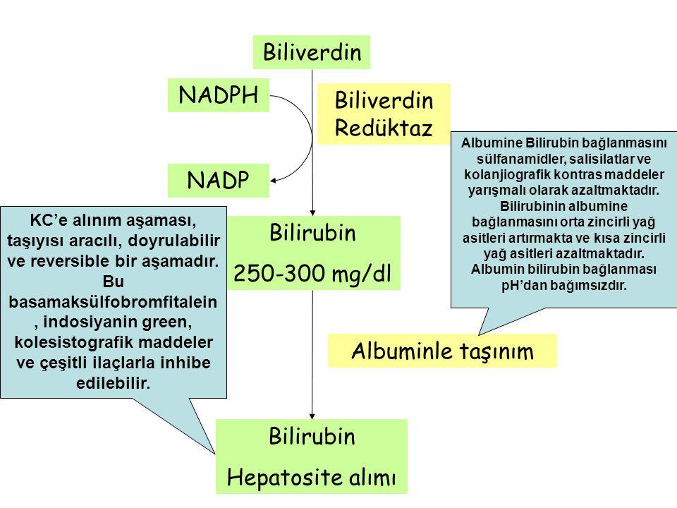 Biliverdin NADPH Biliverdin Redüktaz NADP Bilirubin 250-300 mg/dl