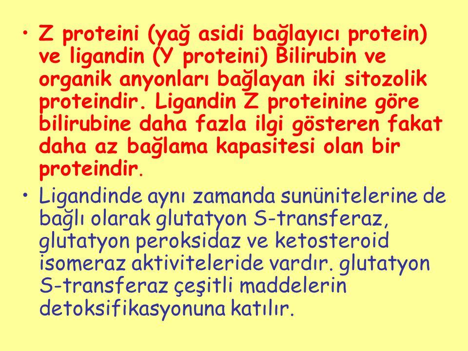 Z proteini (yağ asidi bağlayıcı protein) ve ligandin (Y proteini) Bilirubin ve organik anyonları bağlayan iki sitozolik proteindir. Ligandin Z proteinine göre bilirubine daha fazla ilgi gösteren fakat daha az bağlama kapasitesi olan bir proteindir.