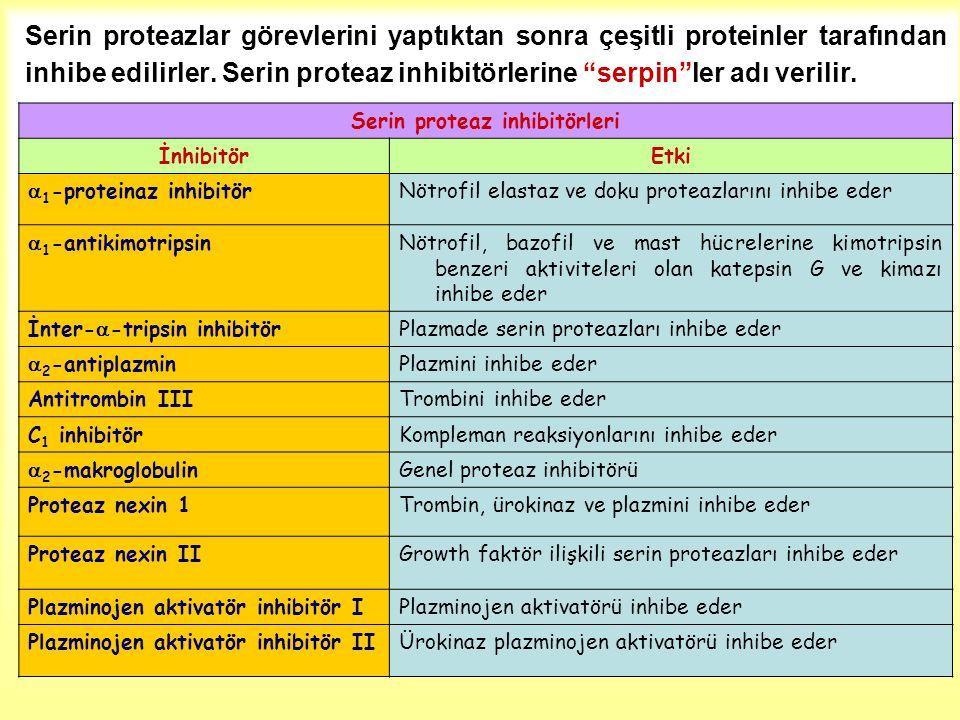 Serin proteaz inhibitörleri
