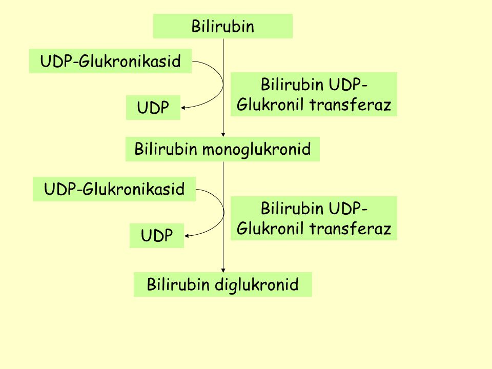 Bilirubin UDP-Glukronil transferaz UDP