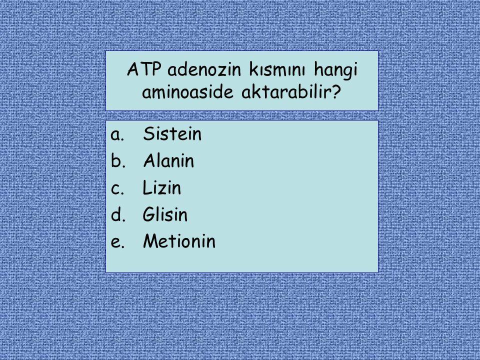 ATP adenozin kısmını hangi aminoaside aktarabilir