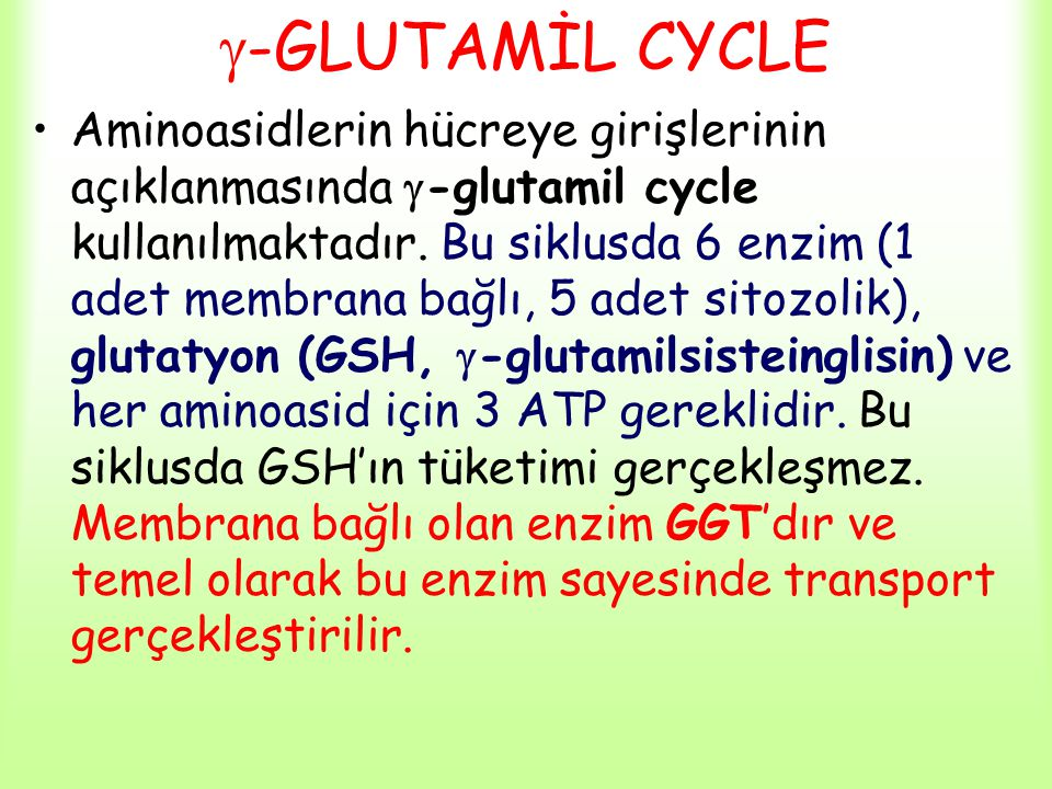 -GLUTAMİL CYCLE