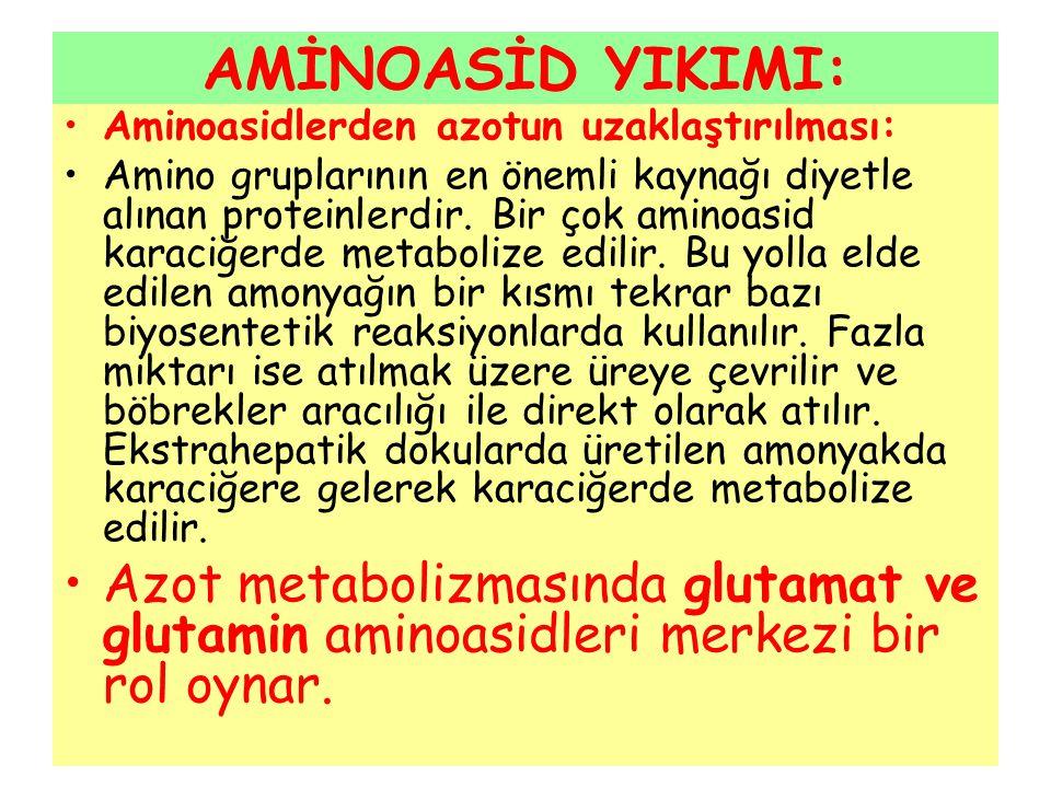 AMİNOASİD YIKIMI: Aminoasidlerden azotun uzaklaştırılması: