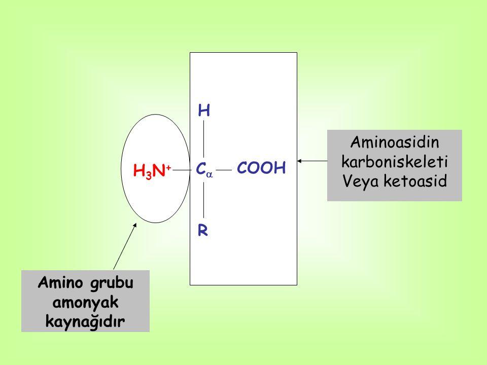 Amino grubu amonyak kaynağıdır