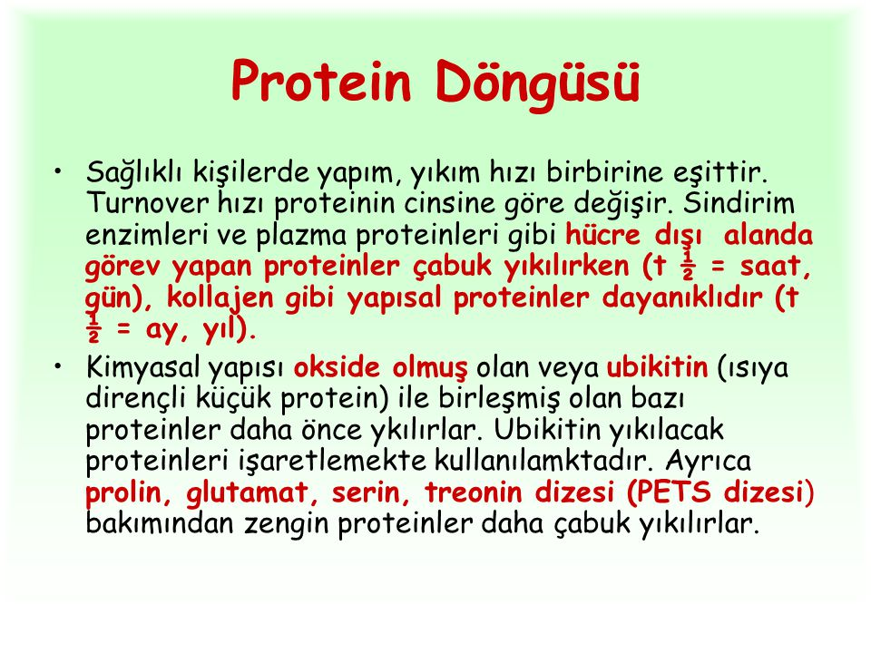Protein Döngüsü