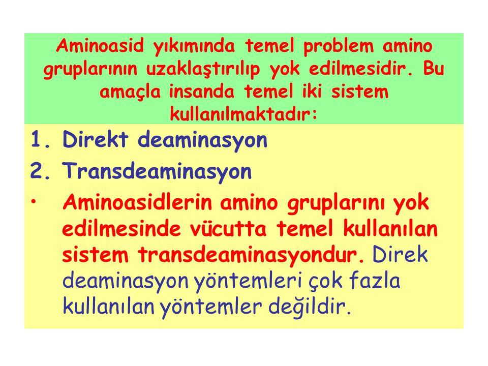 Direkt deaminasyon Transdeaminasyon