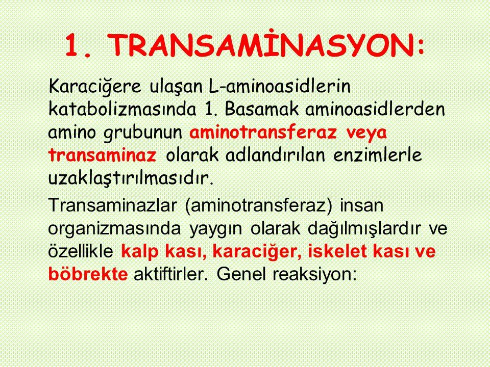 1. TRANSAMİNASYON: