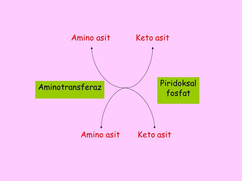 Amino asit Keto asit Piridoksal fosfat Aminotransferaz Amino asit Keto asit