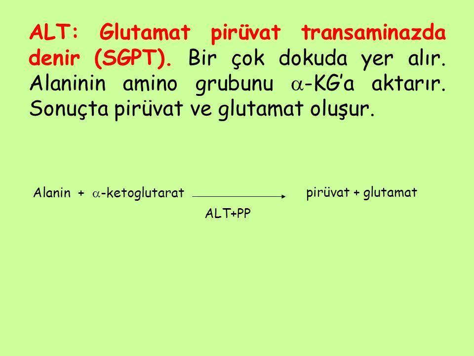 ALT: Glutamat pirüvat transaminazda denir (SGPT)