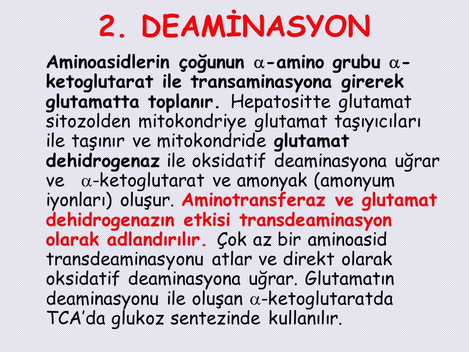 2. DEAMİNASYON
