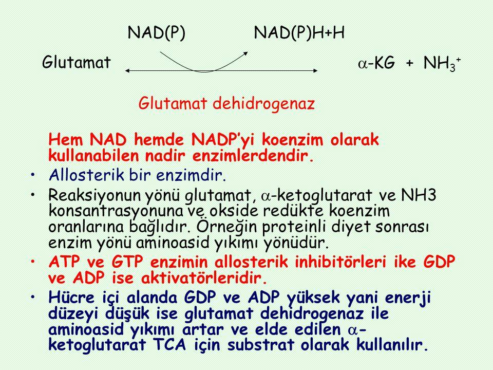 NAD(P) NAD(P)H+H Glutamat. -KG + NH3+ Glutamat dehidrogenaz.