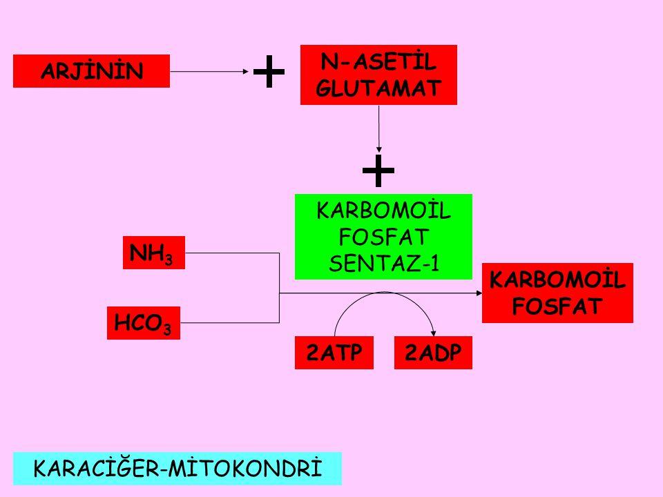 N-ASETİL GLUTAMAT ARJİNİN KARBOMOİL FOSFAT 2ATP 2ADP
