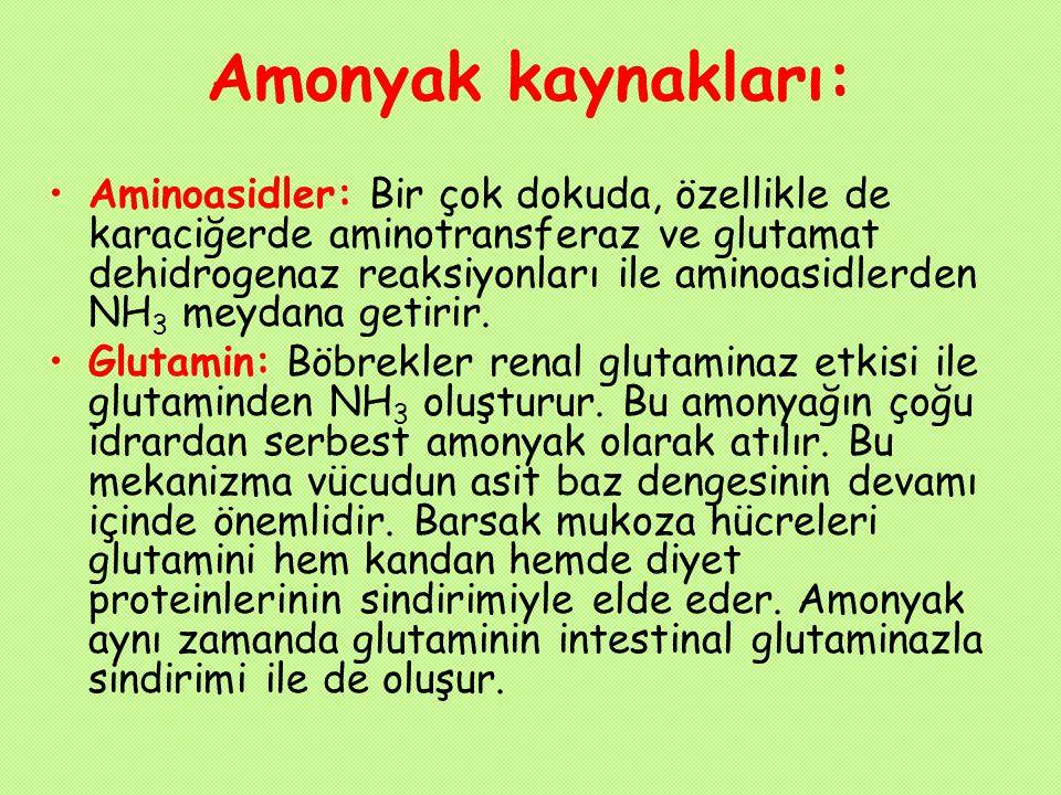 Amonyak kaynakları: