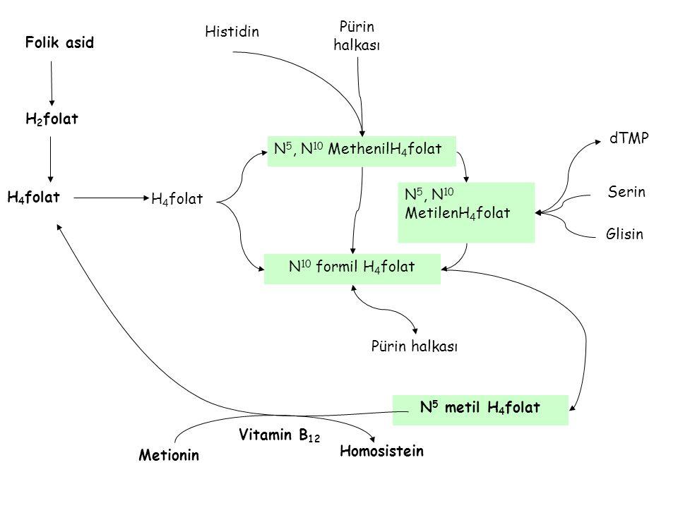 Pürin halkası Histidin. Folik asid. H2folat. dTMP. N5, N10 MethenilH4folat. N5, N10. MetilenH4folat.