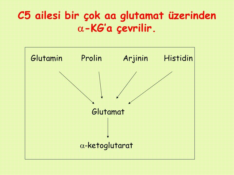 C5 ailesi bir çok aa glutamat üzerinden -KG'a çevrilir.