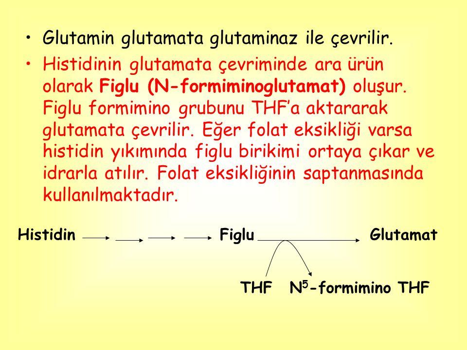 Glutamin glutamata glutaminaz ile çevrilir.