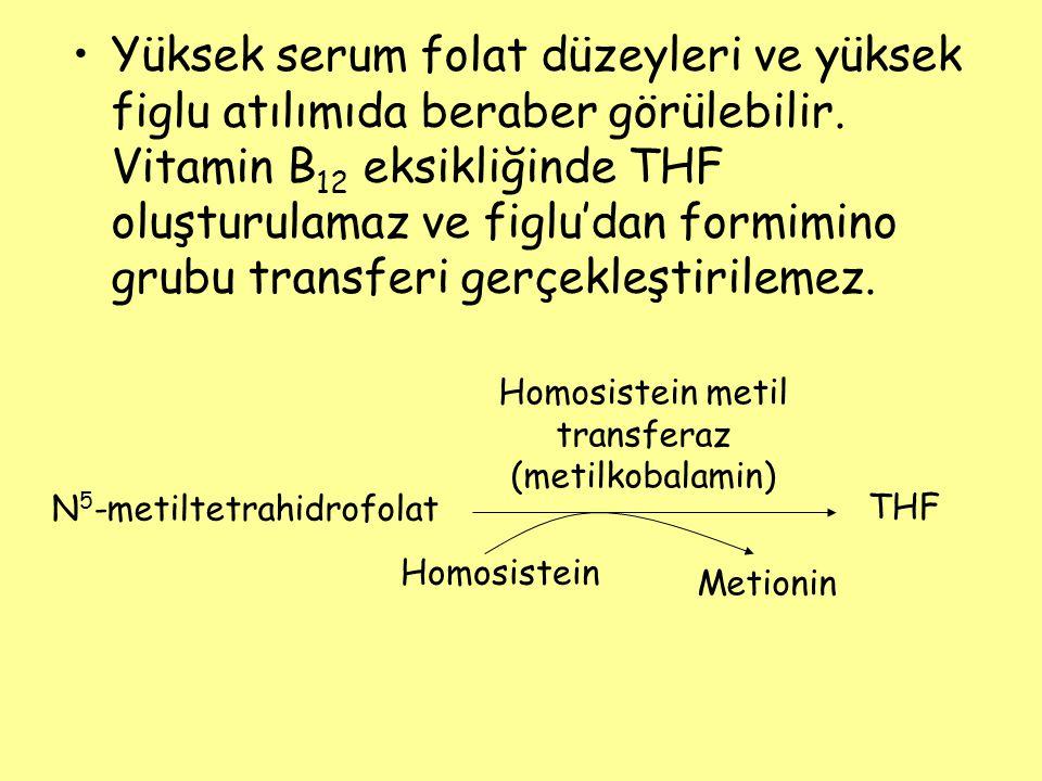 Homosistein metil transferaz