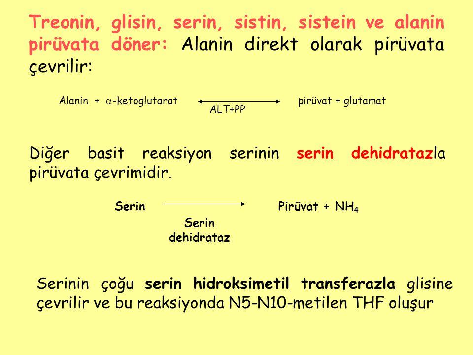 Treonin, glisin, serin, sistin, sistein ve alanin pirüvata döner: Alanin direkt olarak pirüvata çevrilir: