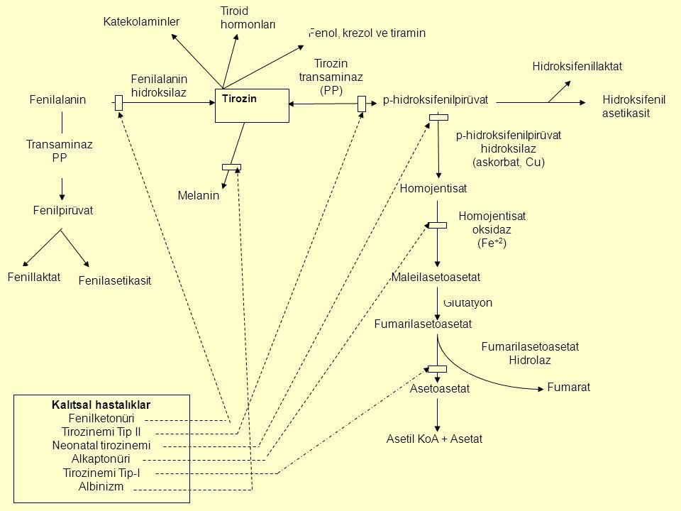 p-hidroksifenilpirüvat