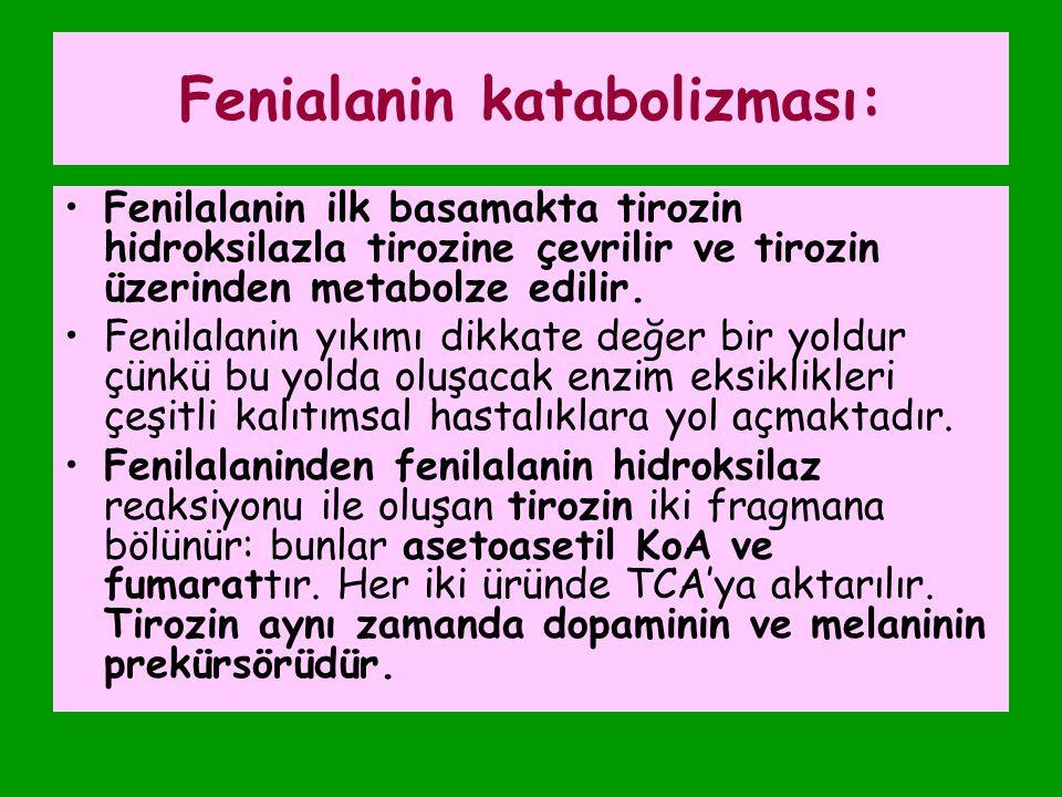 Fenialanin katabolizması:
