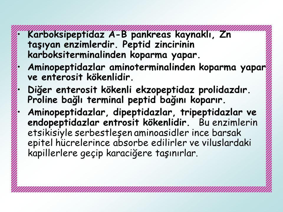Karboksipeptidaz A-B pankreas kaynaklı, Zn taşıyan enzimlerdir
