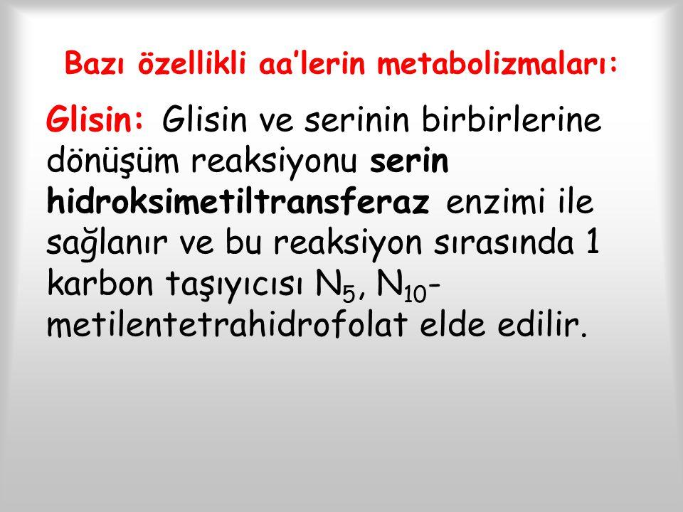 Bazı özellikli aa'lerin metabolizmaları: