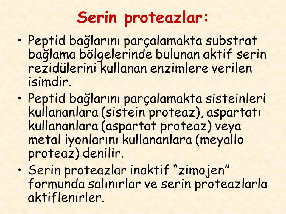 Serin proteazlar: Peptid bağlarını parçalamakta substrat bağlama bölgelerinde bulunan aktif serin rezidülerini kullanan enzimlere verilen isimdir.