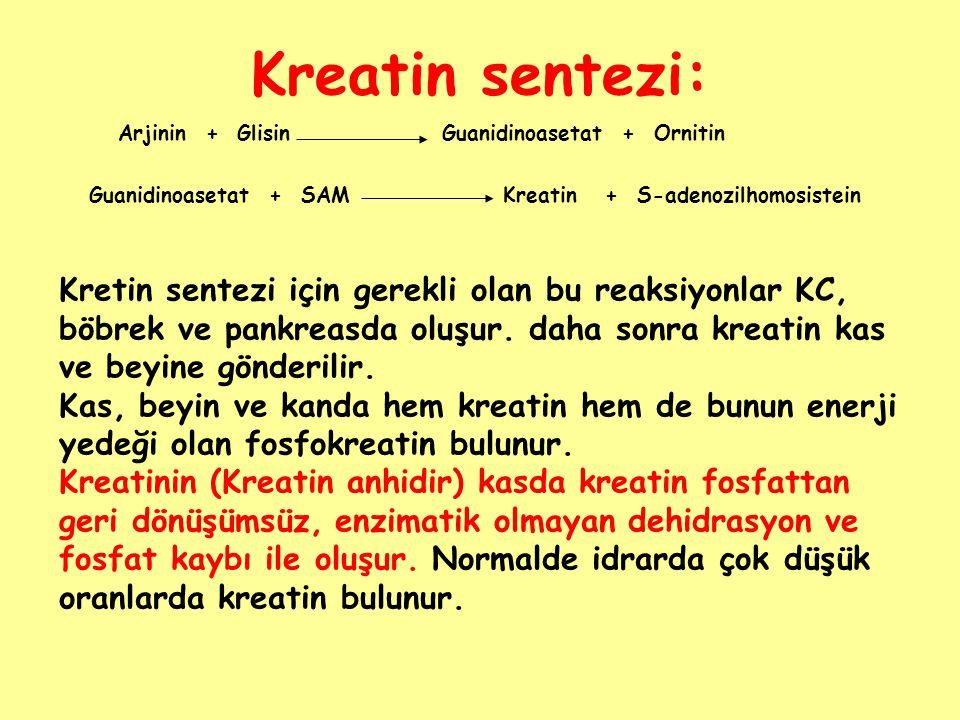 Kreatin sentezi: Arjinin + Glisin. Guanidinoasetat + Ornitin. Guanidinoasetat + SAM. Kreatin + S-adenozilhomosistein.
