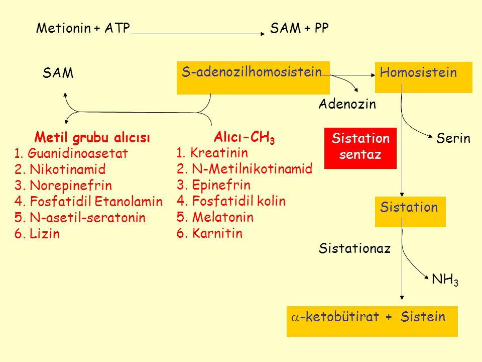 Metionin + ATP SAM + PP. SAM. S-adenozilhomosistein. Homosistein. Adenozin. Metil grubu alıcısı.