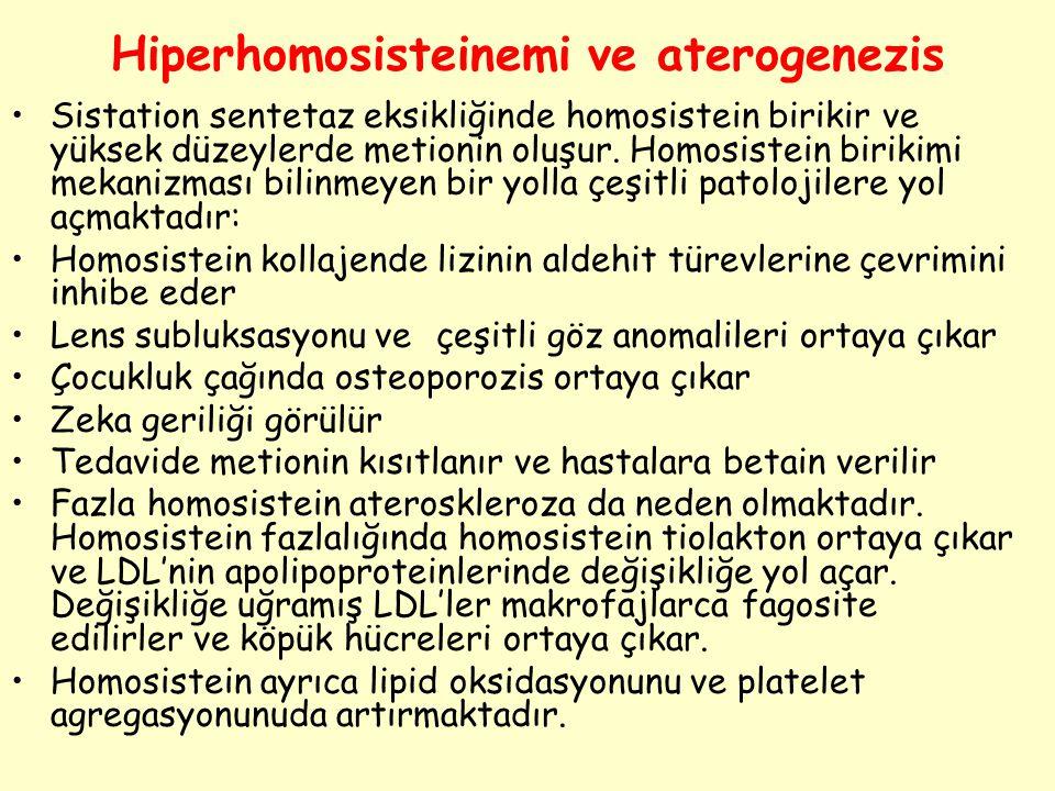Hiperhomosisteinemi ve aterogenezis