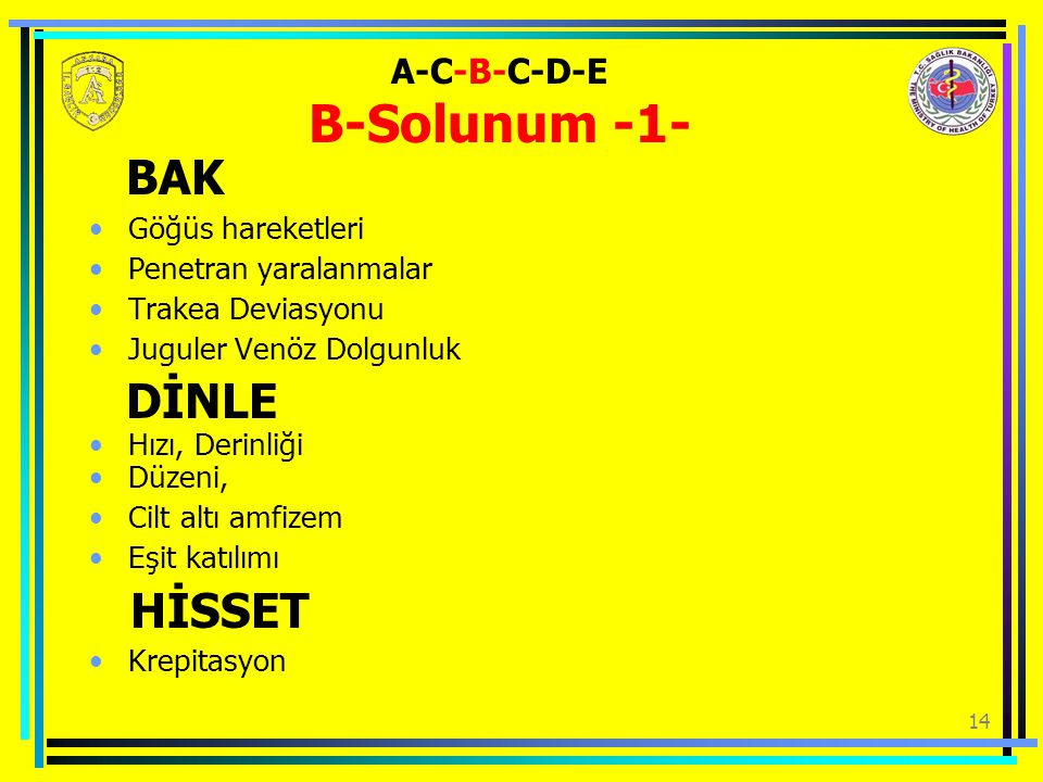 A-C-B-C-D-E B-Solunum -1-