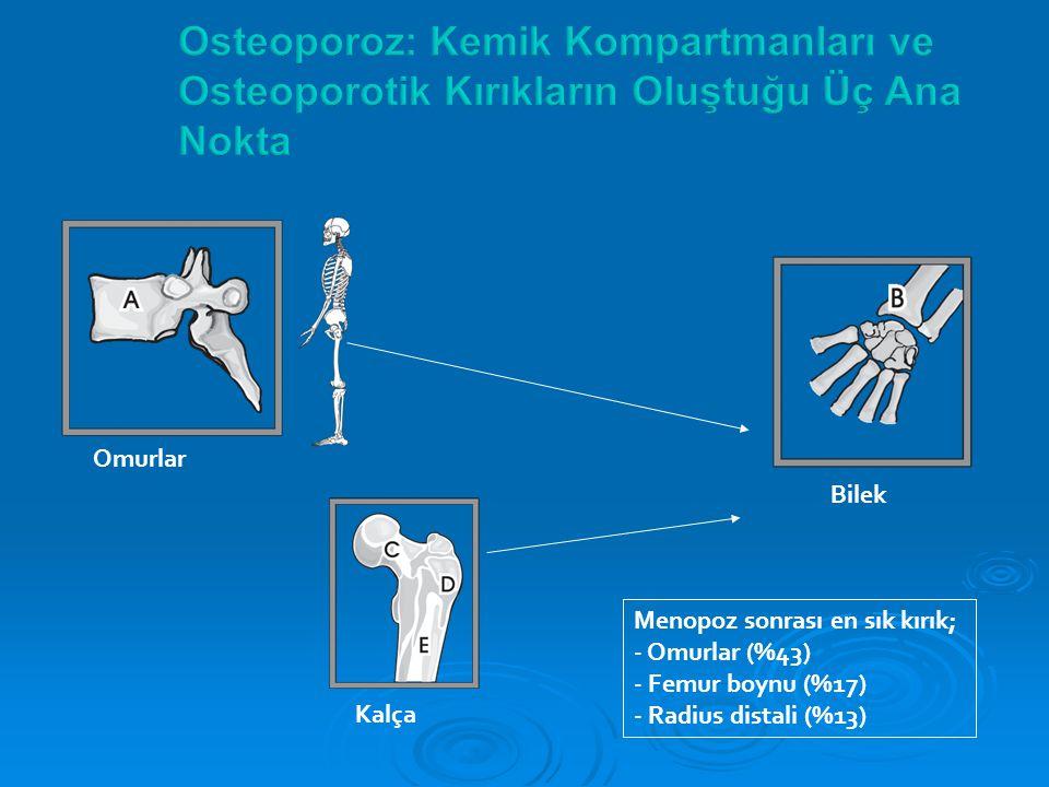Osteoporoz: Kemik Kompartmanları ve Osteoporotik Kırıkların Oluştuğu Üç Ana Nokta