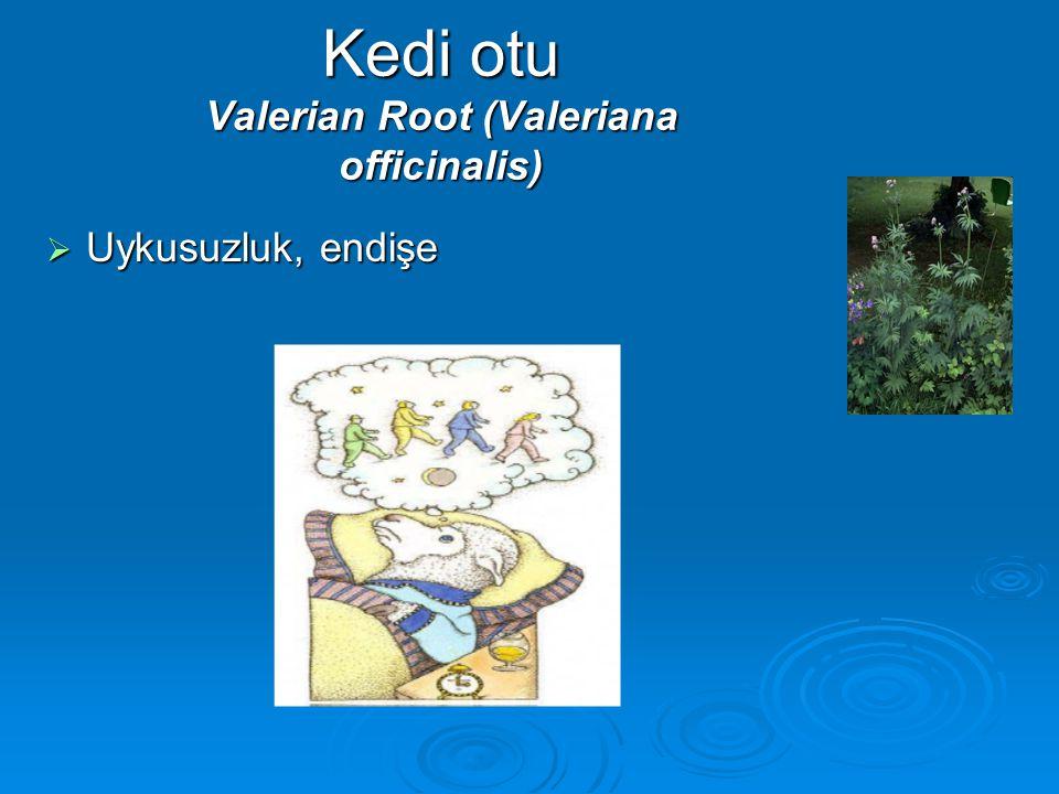 Kedi otu Valerian Root (Valeriana officinalis)