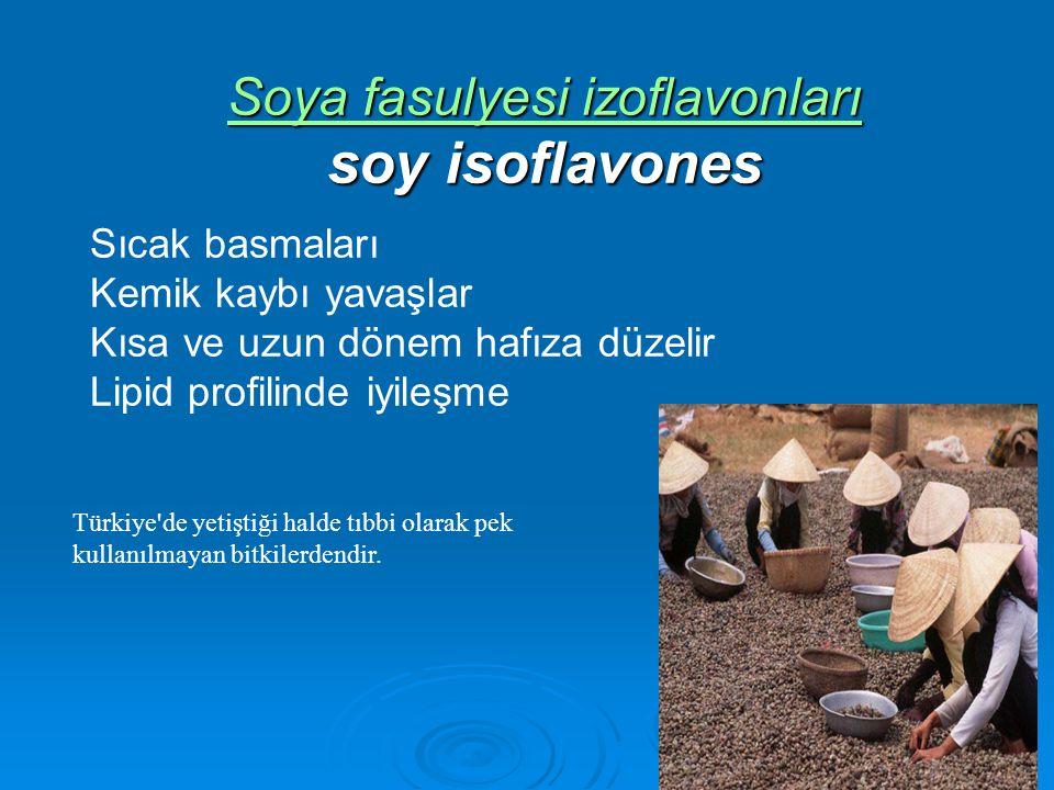 Soya fasulyesi izoflavonları soy isoflavones