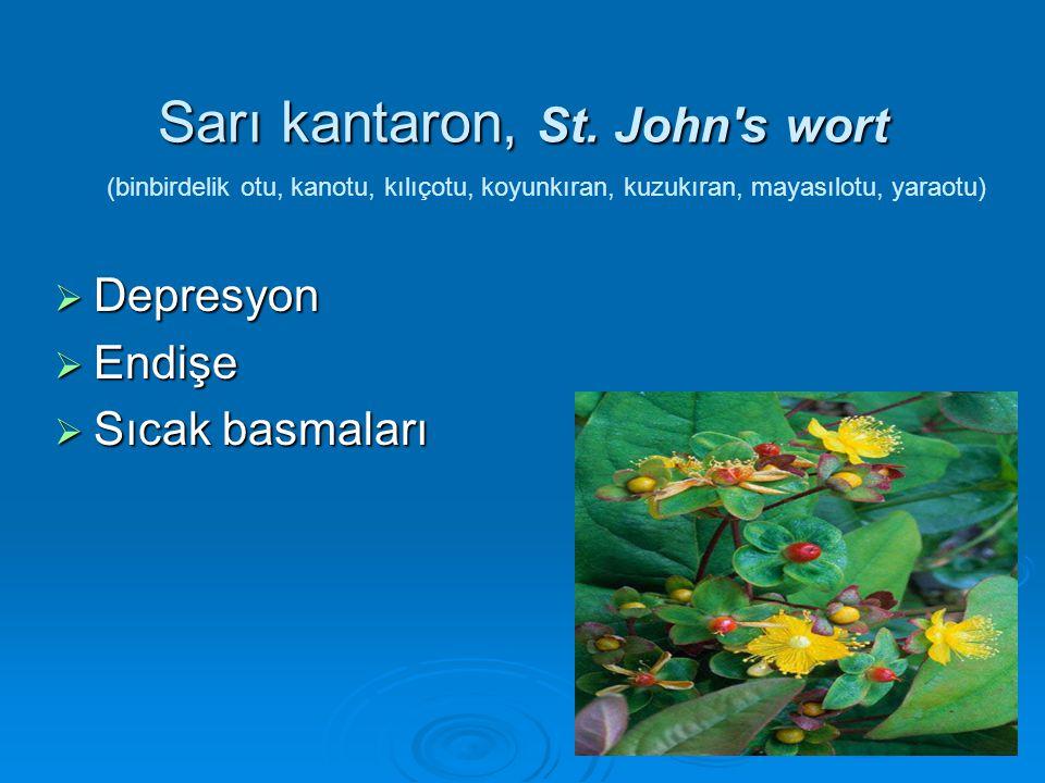 Sarı kantaron, St. John s wort
