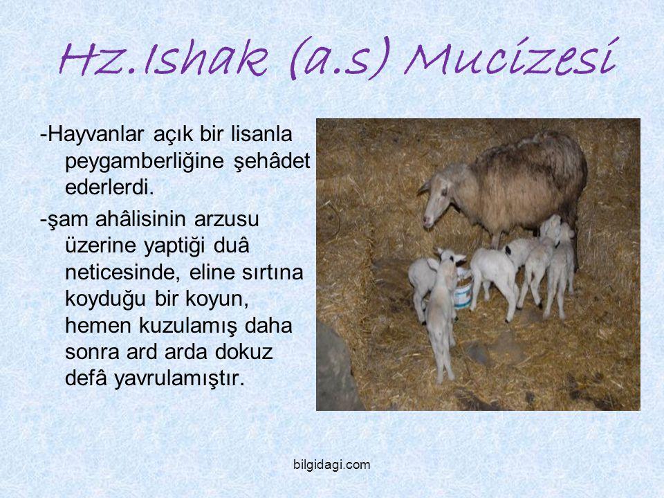 Hz.Ishak (a.s) Mucizesi -Hayvanlar açık bir lisanla peygamberliğine şehâdet ederlerdi.