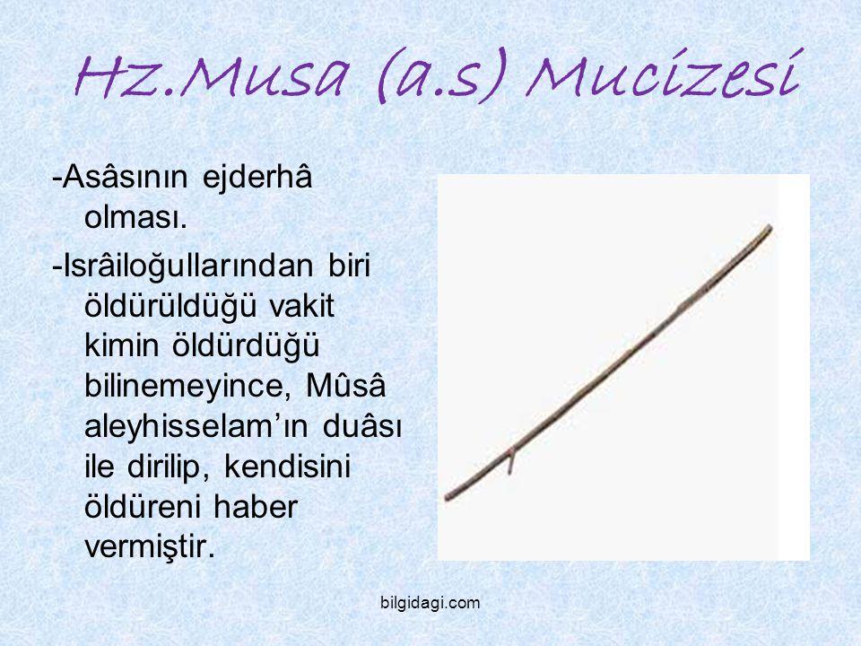 Hz.Musa (a.s) Mucizesi -Asâsının ejderhâ olması.