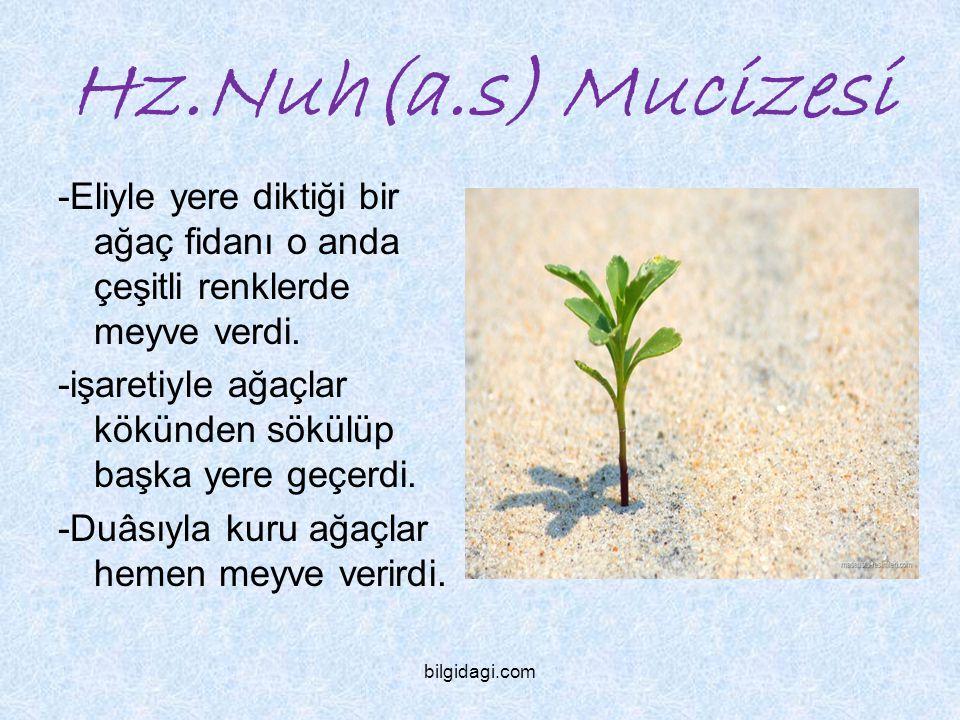 Hz.Nuh(a.s) Mucizesi -Eliyle yere diktiği bir ağaç fidanı o anda çeşitli renklerde meyve verdi.