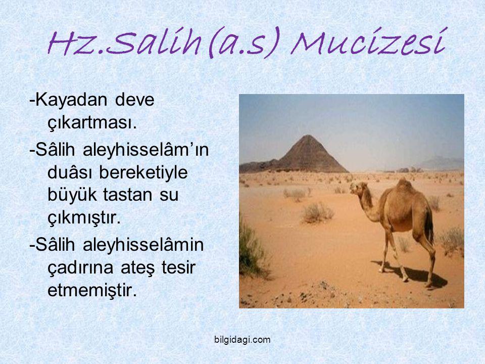 Hz.Salih(a.s) Mucizesi -Kayadan deve çıkartması.