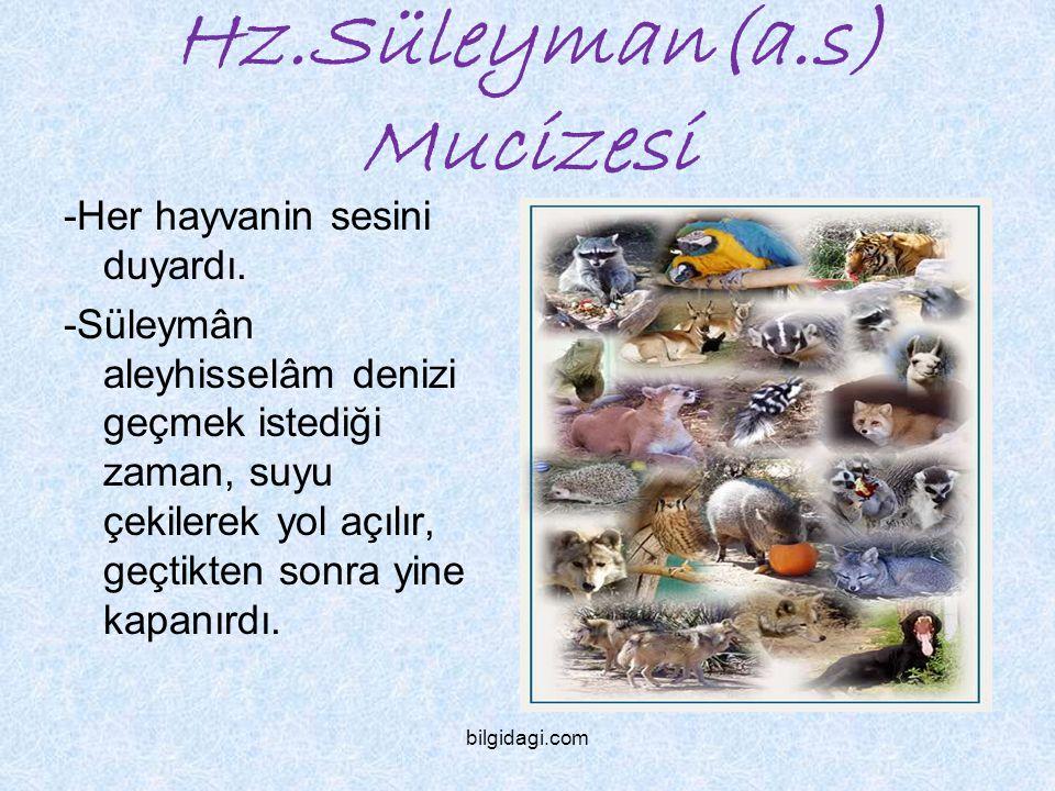 Hz.Süleyman(a.s) Mucizesi