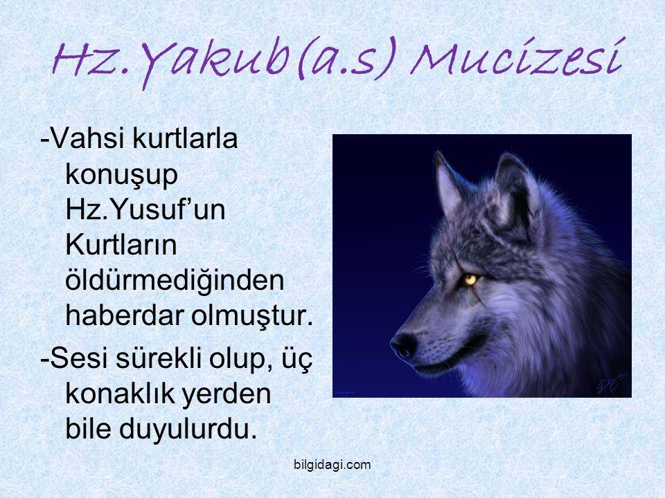 Hz.Yakub(a.s) Mucizesi -Vahsi kurtlarla konuşup Hz.Yusuf'un Kurtların öldürmediğinden haberdar olmuştur.