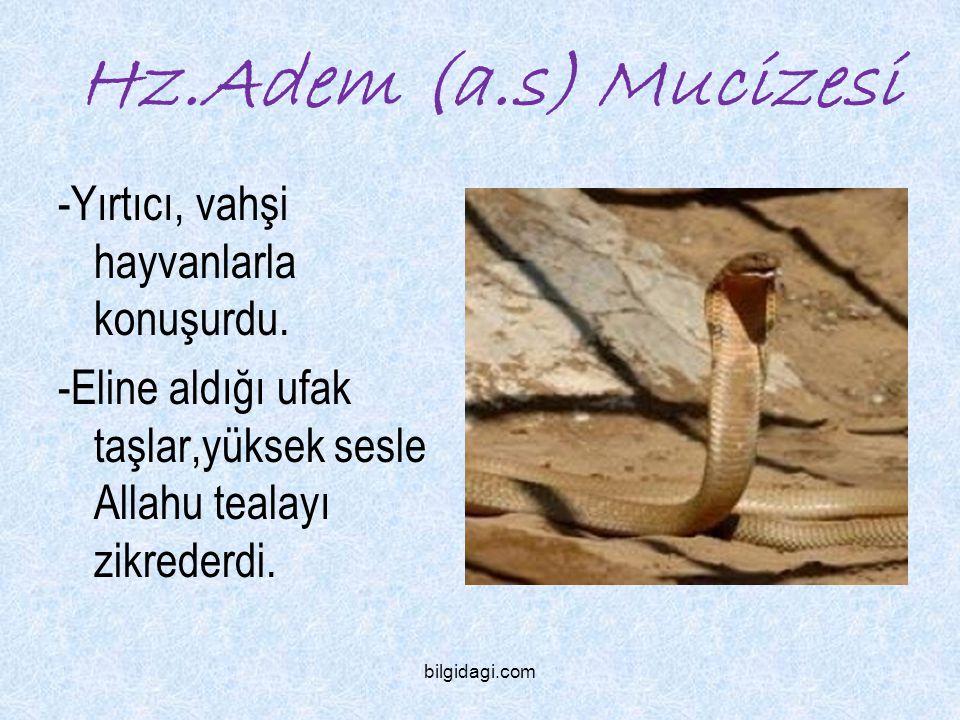 Hz.Adem (a.s) Mucizesi -Yırtıcı, vahşi hayvanlarla konuşurdu.