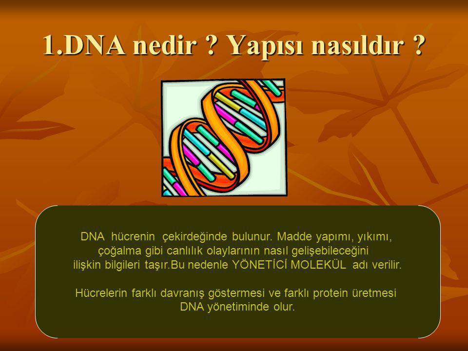 1.DNA nedir Yapısı nasıldır