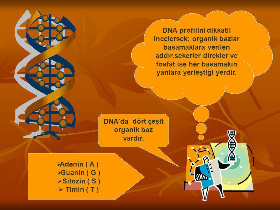 DNA'da dört çeşit organik baz vardır.